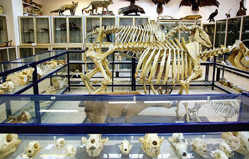 Mashhad Zoological Museum