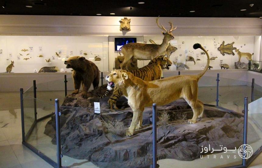 Vakil Abad museum
