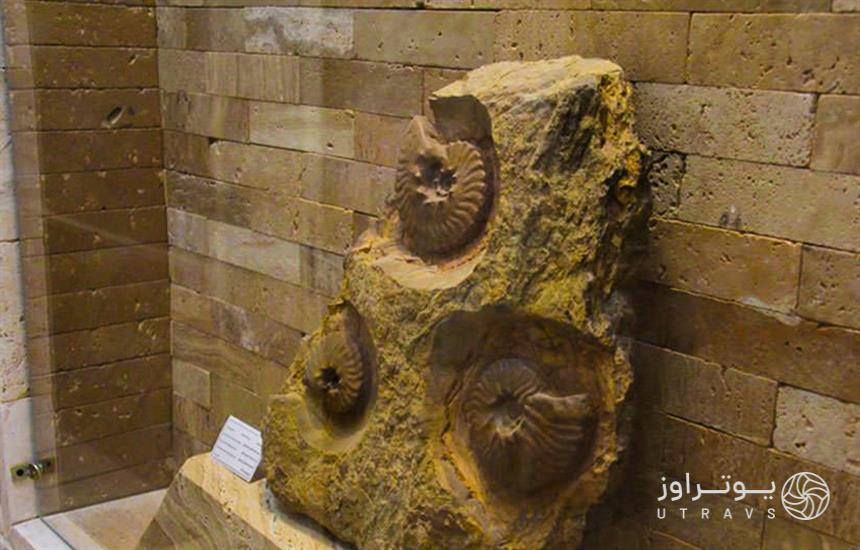 Mashhad Paleontological Museum
