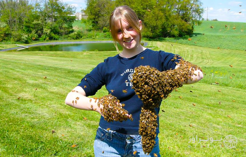 Bee; a useful and dangerous insect